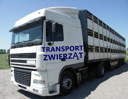 Kierowca konwojent – transport zwierząt